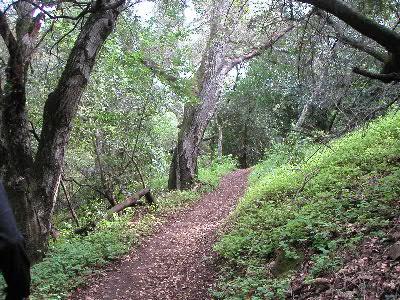 Race Course Photo of trails